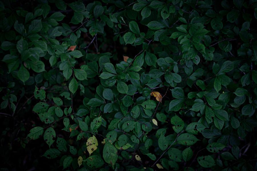 有明邸ウェディングAPITS art photography 折山正樹
